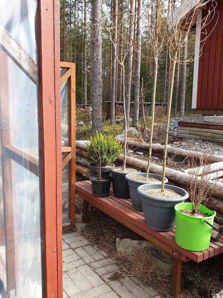 Talvehtineet kasvit